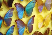 Ferienprogramm für junge Museumsbesucher - Supersinne in der Tierwelt